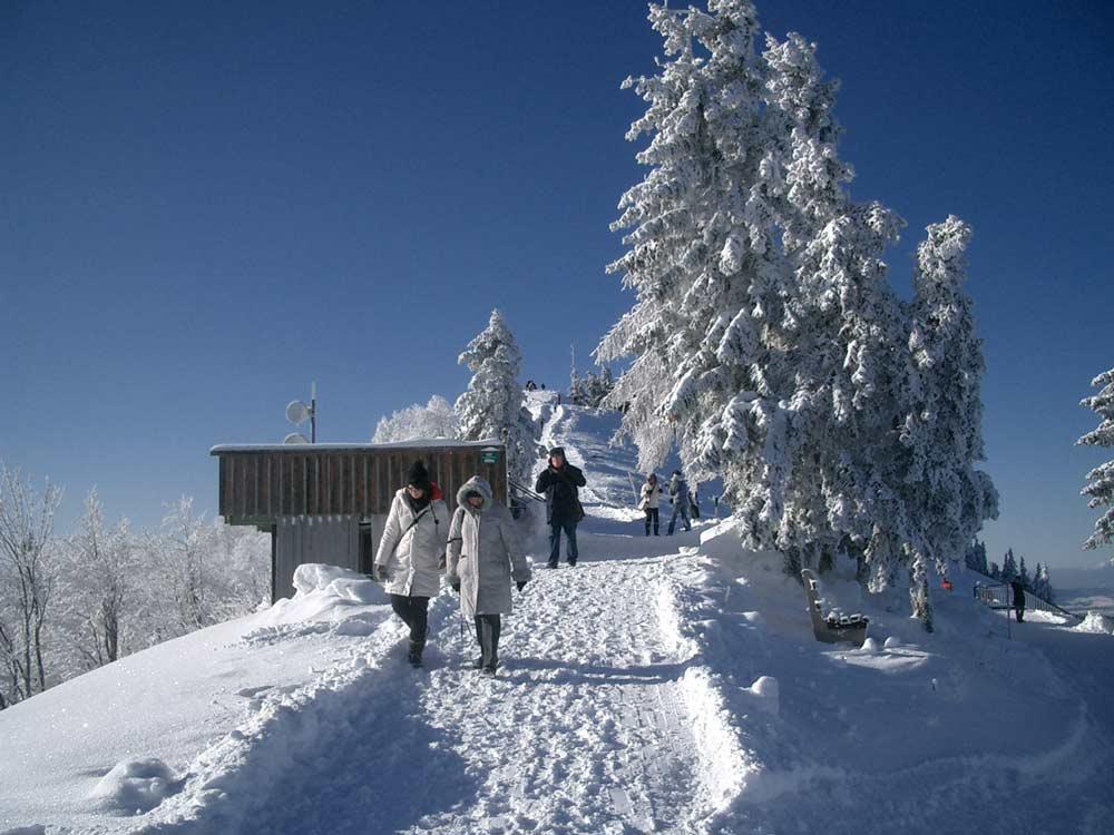 Ein vergnüglicher Winterspaziergang am Wolfgangsee PillsteinRundwegimWinter Naturerlebnis Wandern Winter