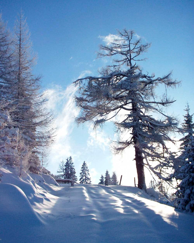Ein vergnüglicher Winterspaziergang am Wolfgangsee Winterlandschaft Naturerlebnis Wandern Winter