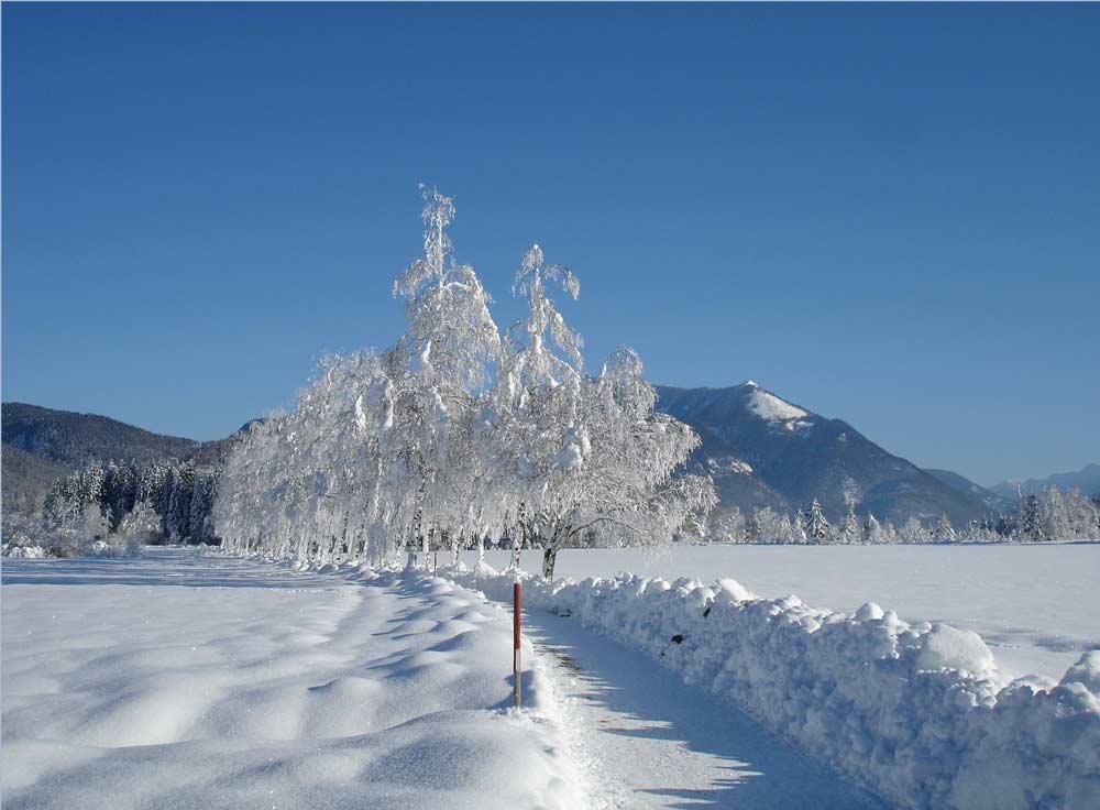 Ein vergnüglicher Winterspaziergang am Wolfgangsee WinterlandschaftBlinklingmoos Naturerlebnis Wandern Winter