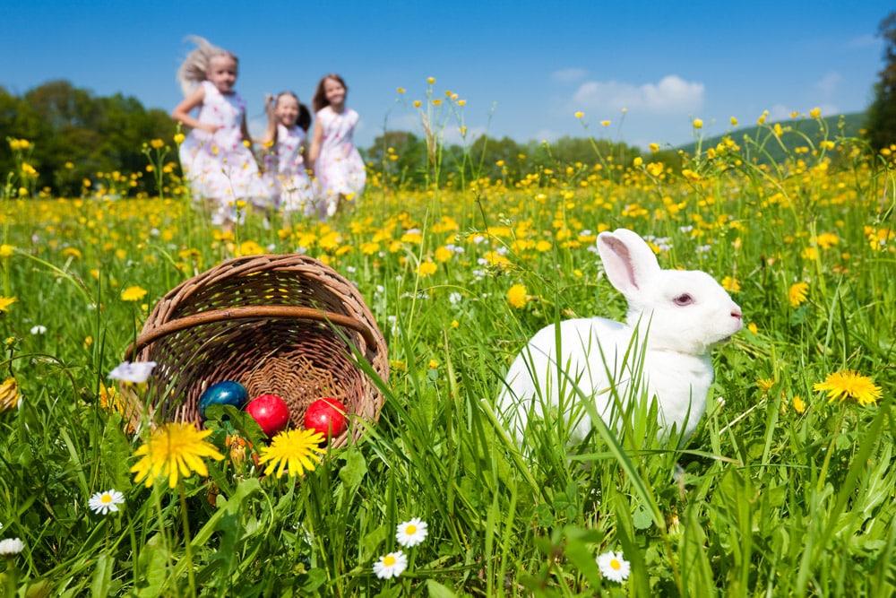 Ostern im Salzkammergut hase-eier News